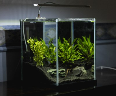 photo of a planted tank with a bright light in the bedroom