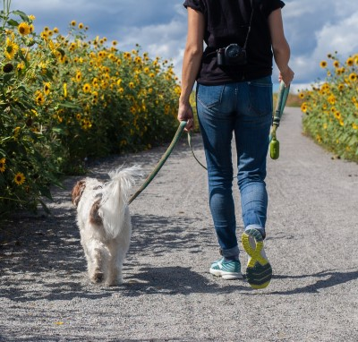 owner taking dog for a walk because their barking dog wakes up the baby