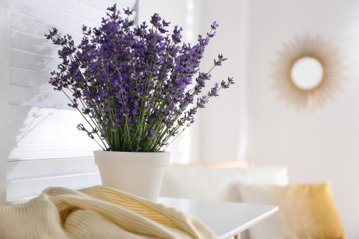 photo of lavender plant in bedroom for use as a sleep aid